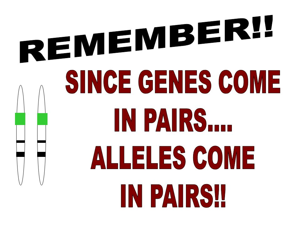REMEMBER!! SINCE GENES COME IN PAIRS.... ALLELES COME IN PAIRS!!
