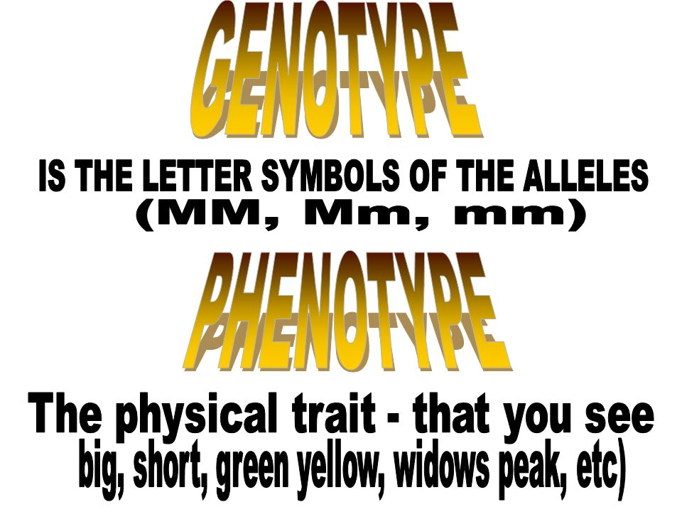 GENOTYPE PHENOTYPE IS THE LETTER SYMBOLS OF THE ALLELES (MM, Mm, mm)
