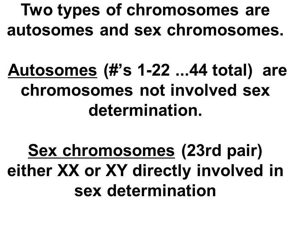 Two types of chromosomes are autosomes and sex chromosomes.