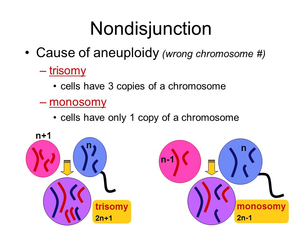 Nondisjunction Cause of aneuploidy (wrong chromosome #) trisomy