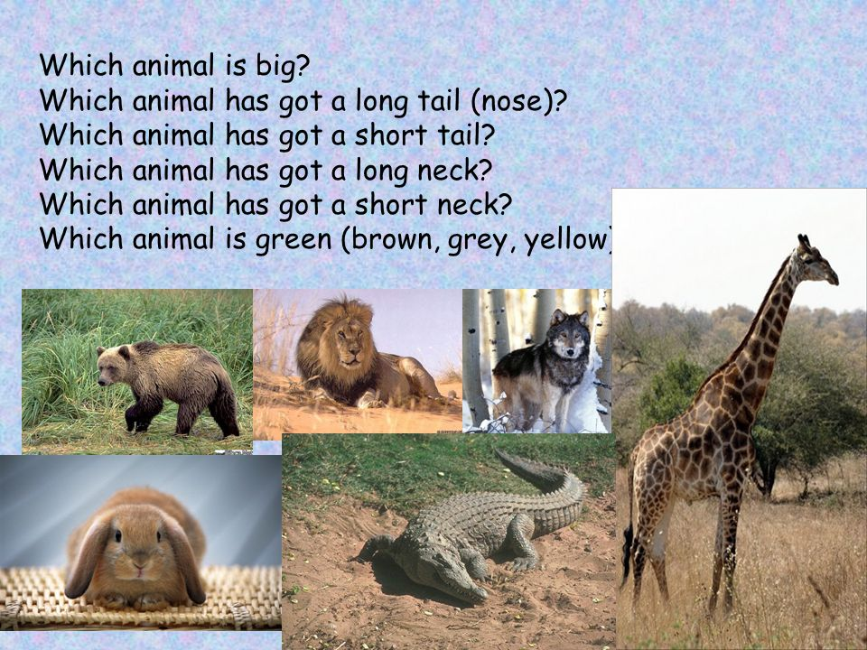 Which animal is big. Which animal has got a long tail (nose)