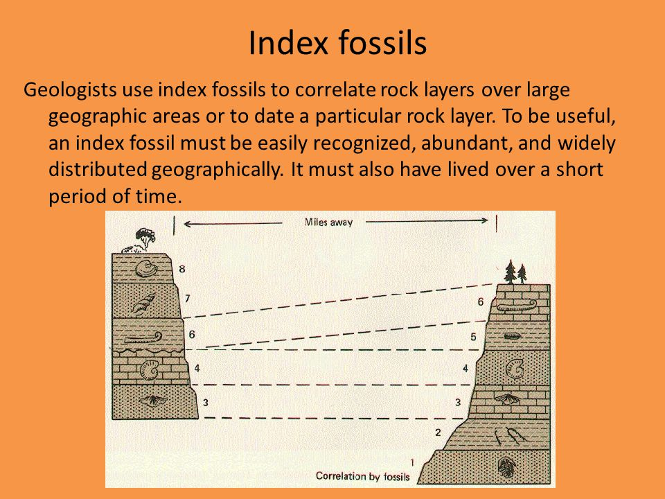 Index fossils are used in what type of dating