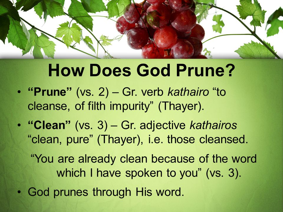 How Does God Prune Prune (vs. 2) – Gr. verb kathairo to cleanse, of filth impurity (Thayer).