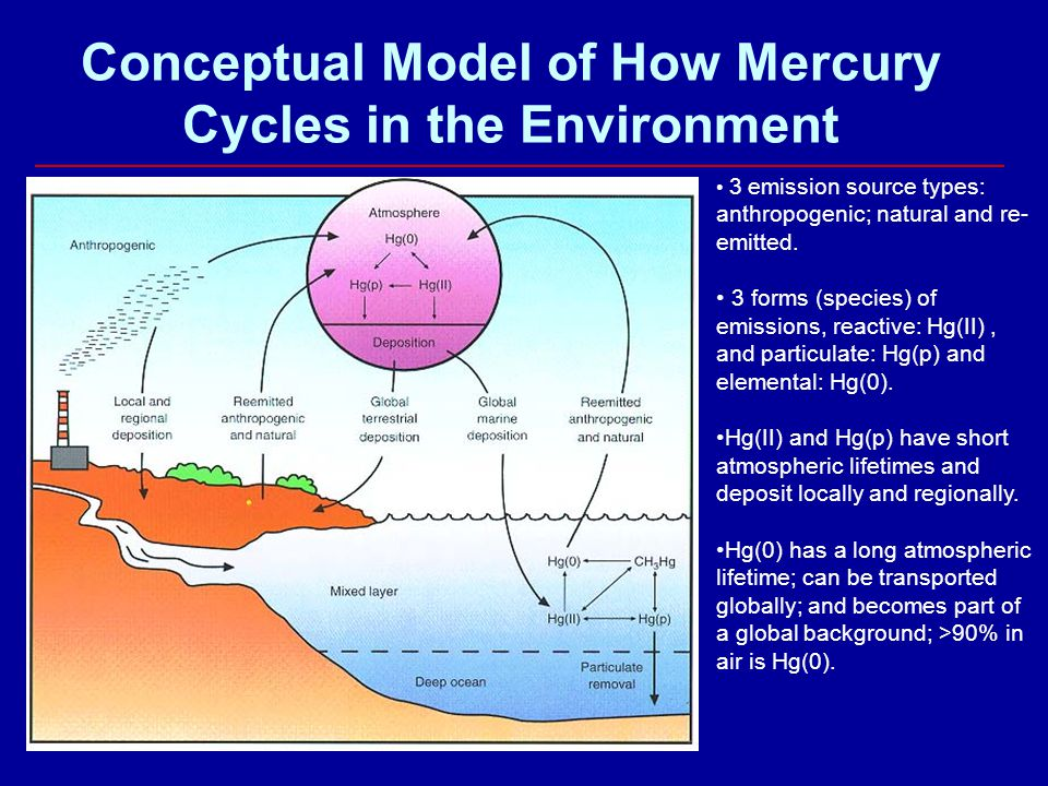 Conceptual Model of How Mercury Cycles in the Environment