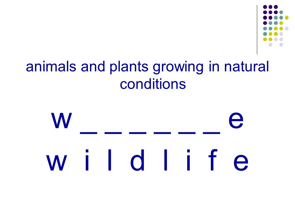 animals and plants growing in natural conditions