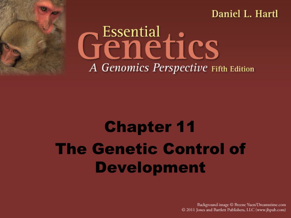 Chapter 11 The Genetic Control of Development