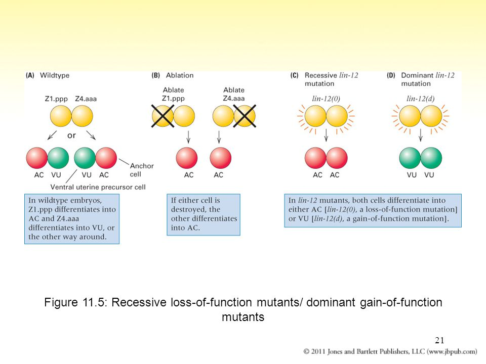 Figure 11.5: Recessive loss-of-function mutants/ dominant gain-of-function mutants