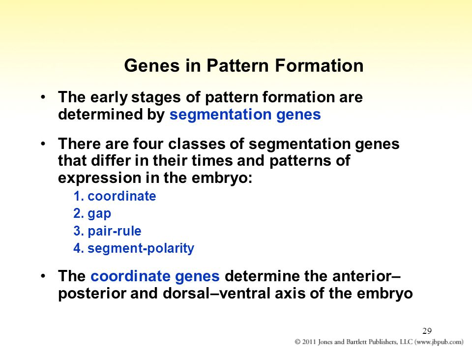 Genes in Pattern Formation