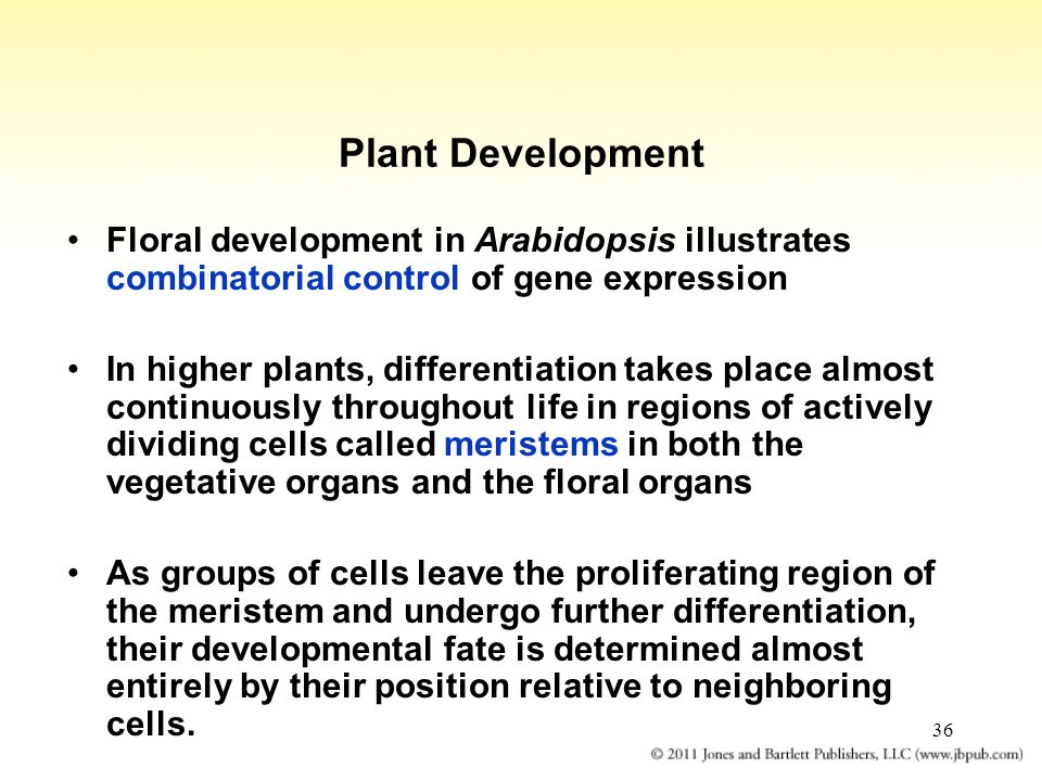 Plant Development Floral development in Arabidopsis illustrates combinatorial control of gene expression.