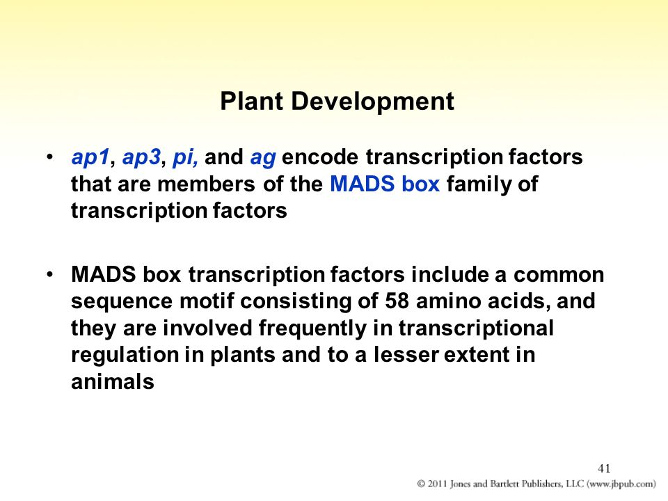 Plant Development ap1, ap3, pi, and ag encode transcription factors that are members of the MADS box family of transcription factors.