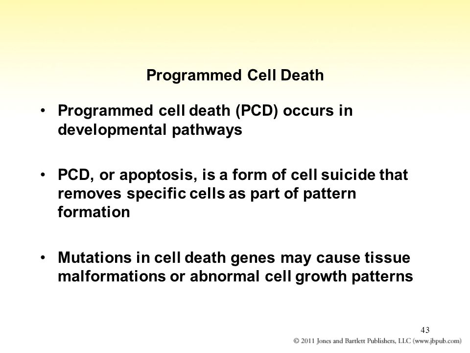 Programmed Cell Death Programmed cell death (PCD) occurs in developmental pathways.