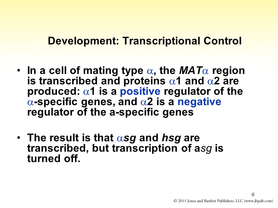 Development: Transcriptional Control