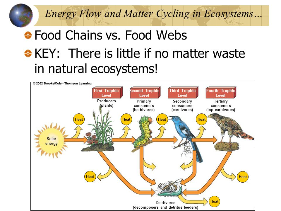 energy flow and matter cycling in ecosystems 20 food webs