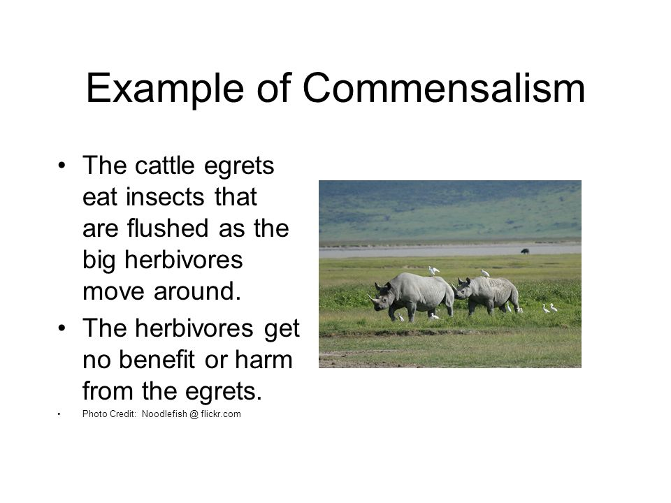 Symbiosis and symbiotic relationships ppt video online download.