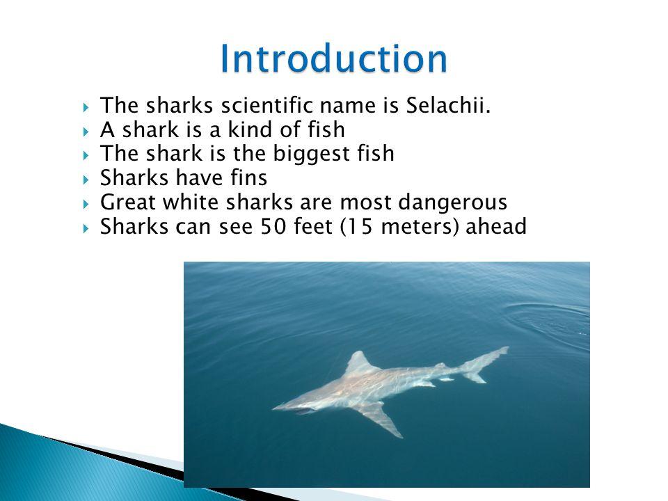 Powerpoint Presentation On Sharks