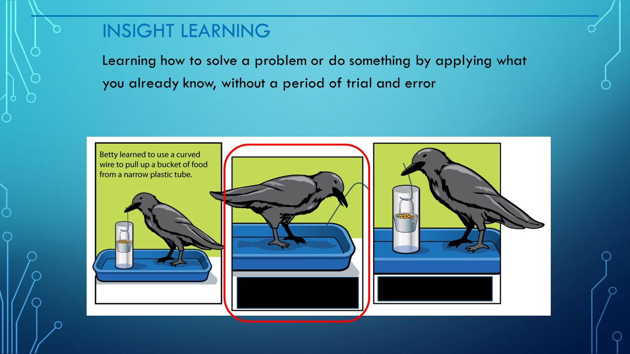 insight learning biology examples