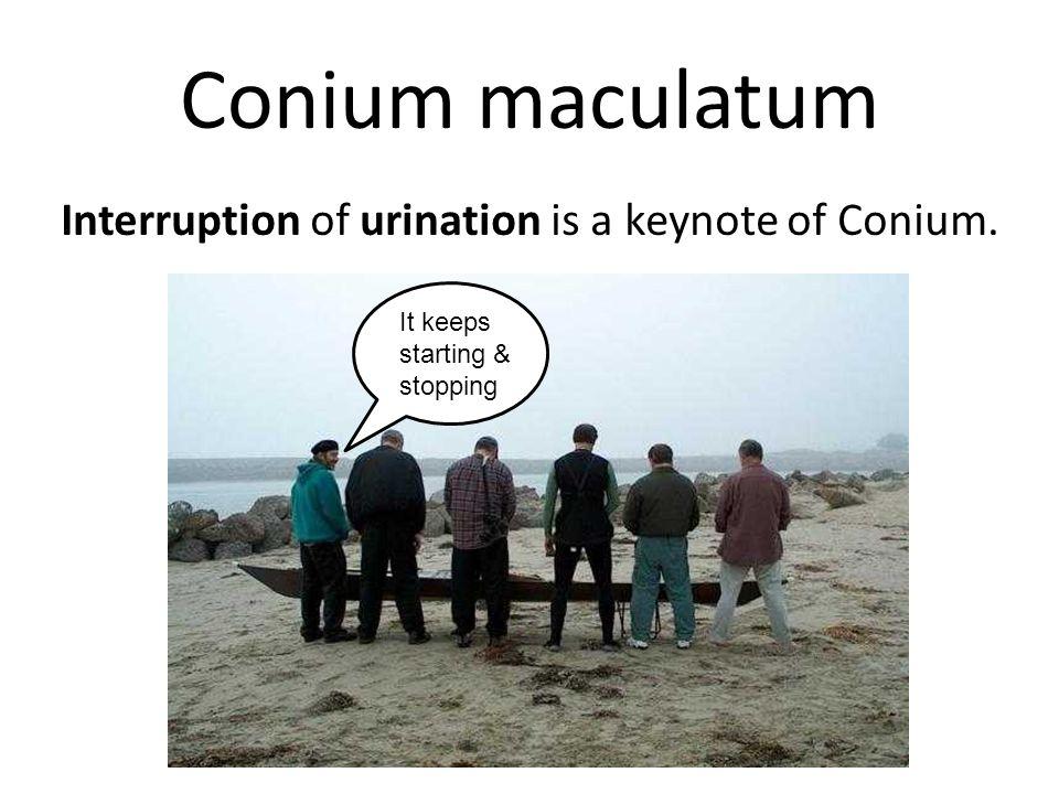 Conium maculatum  - ppt video online download