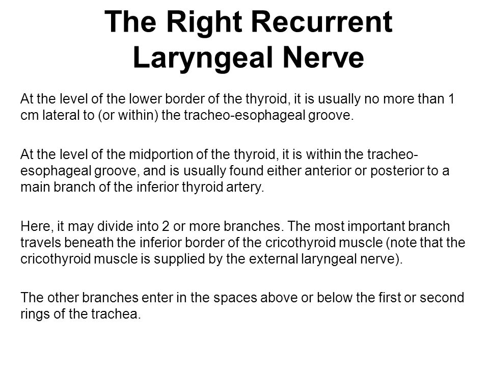 The Right Recurrent Laryngeal Nerve
