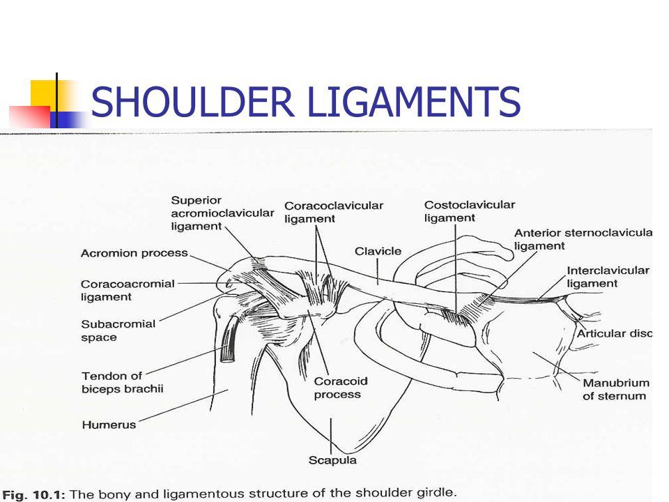 Shoulder Assessment Ppt Video Online Download