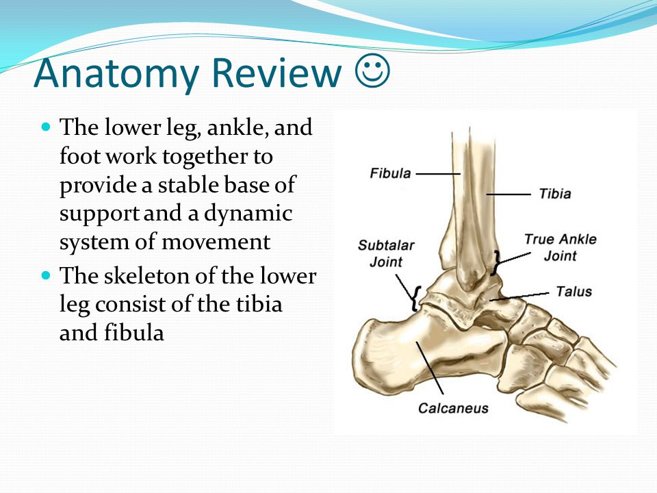 Injuries to the Lower Leg, Ankle, and Foot - ppt video online download