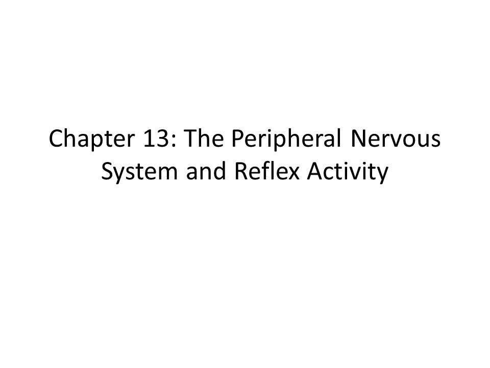Chapter 13: The Peripheral Nervous System and Reflex Activity - ppt ...