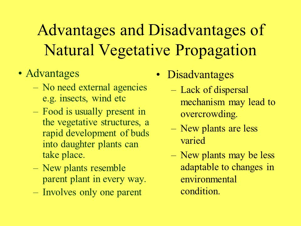 Difference between sexual and vegetative propagation