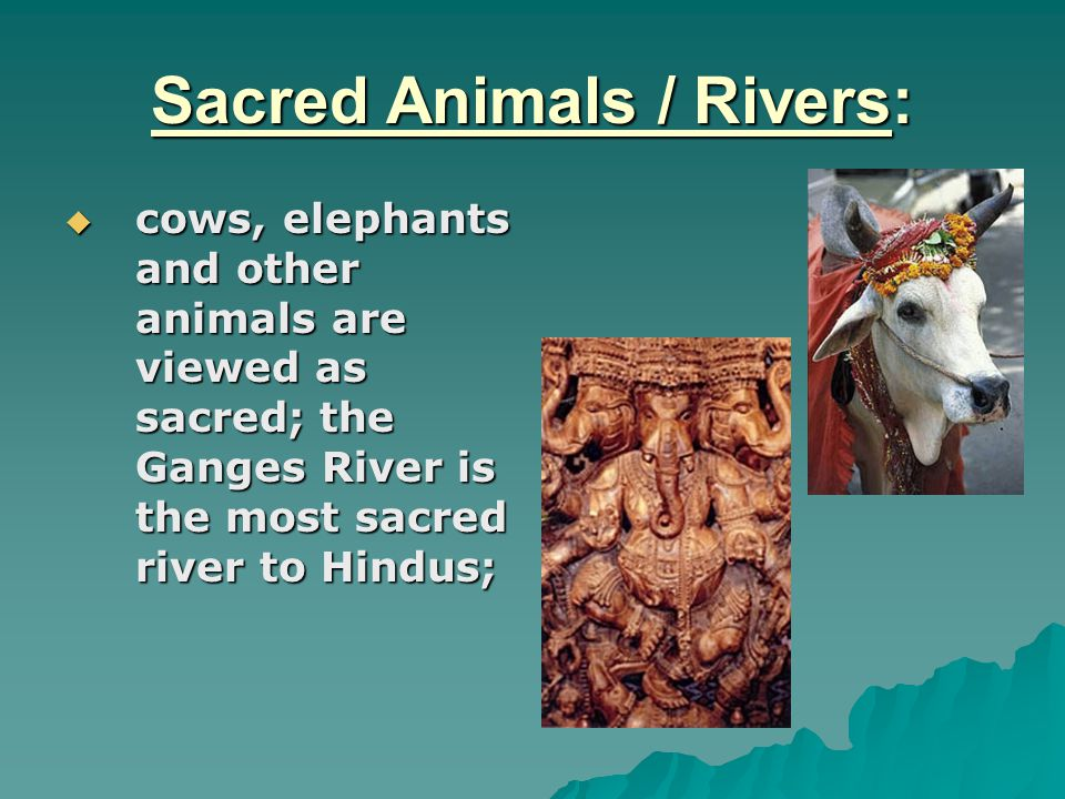 Sacred Animals / Rivers: