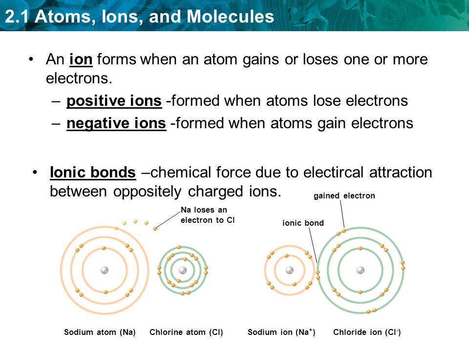 An ion forms when an atom gains or loses one or more electrons.