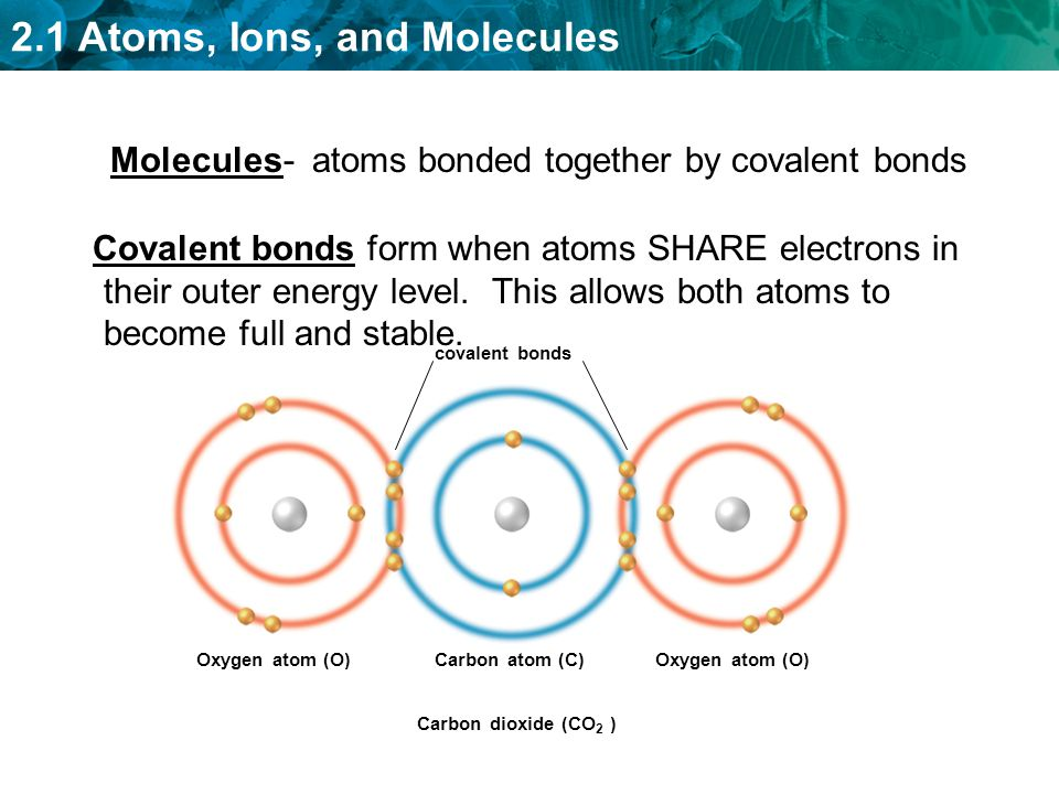 Molecules- atoms bonded together by covalent bonds