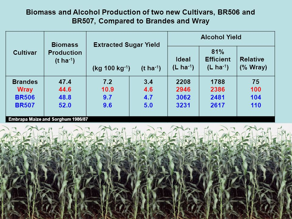 Biomass and Alcohol Production of two new Cultivars, BR506 and BR507, Compared to Brandes and Wray