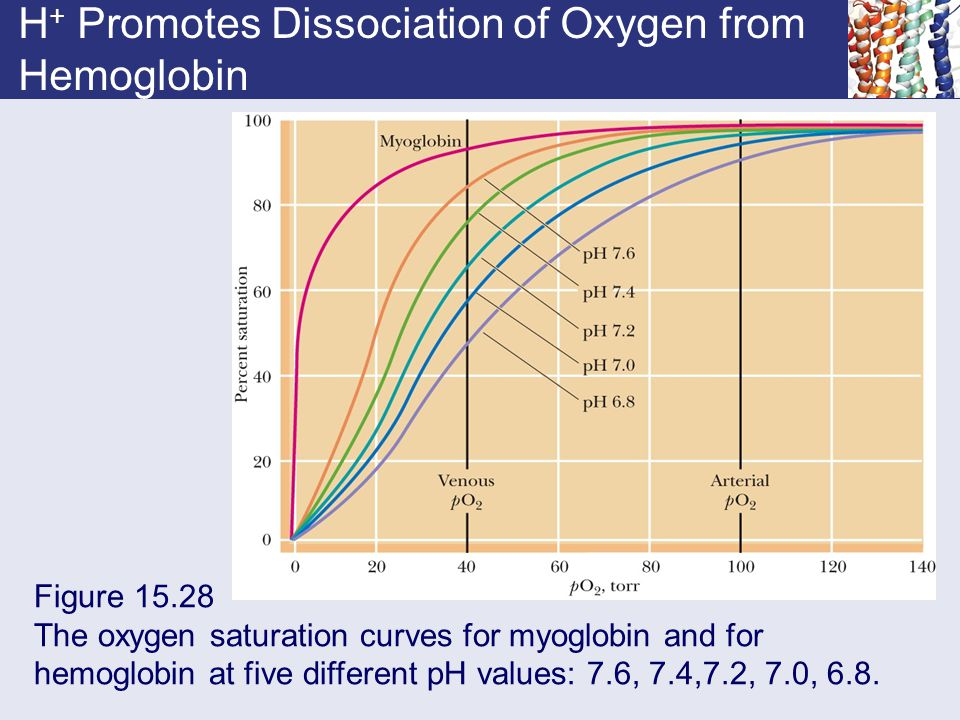 Chapter 15 Enzyme Regulation Ppt Download