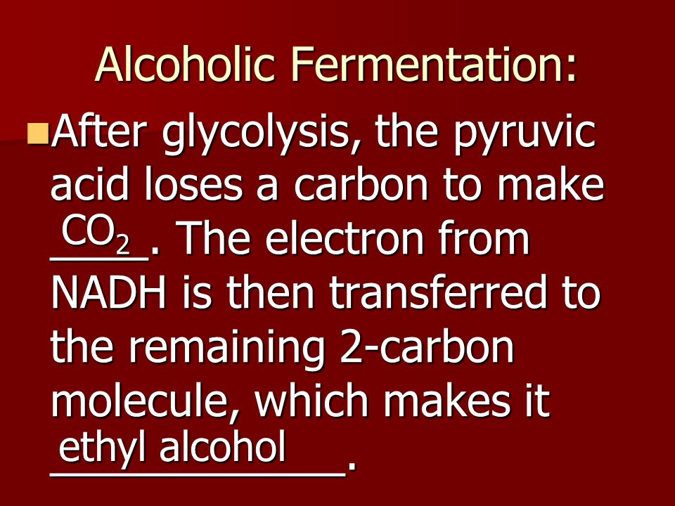 Alcoholic Fermentation: