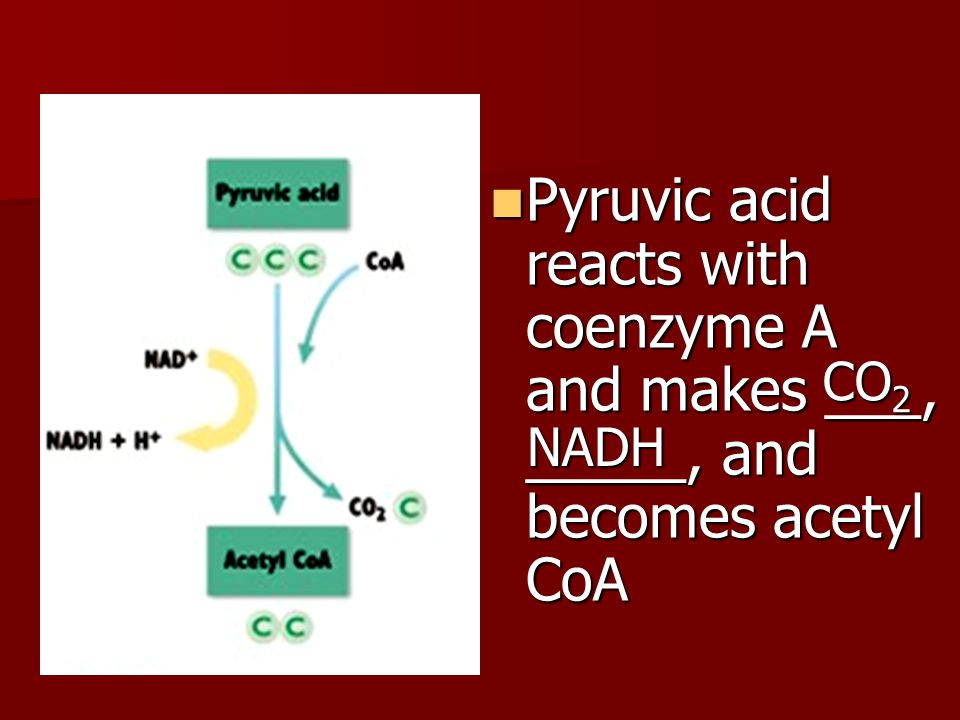 Pyruvic acid reacts with coenzyme A and makes ___, _____, and becomes acetyl CoA