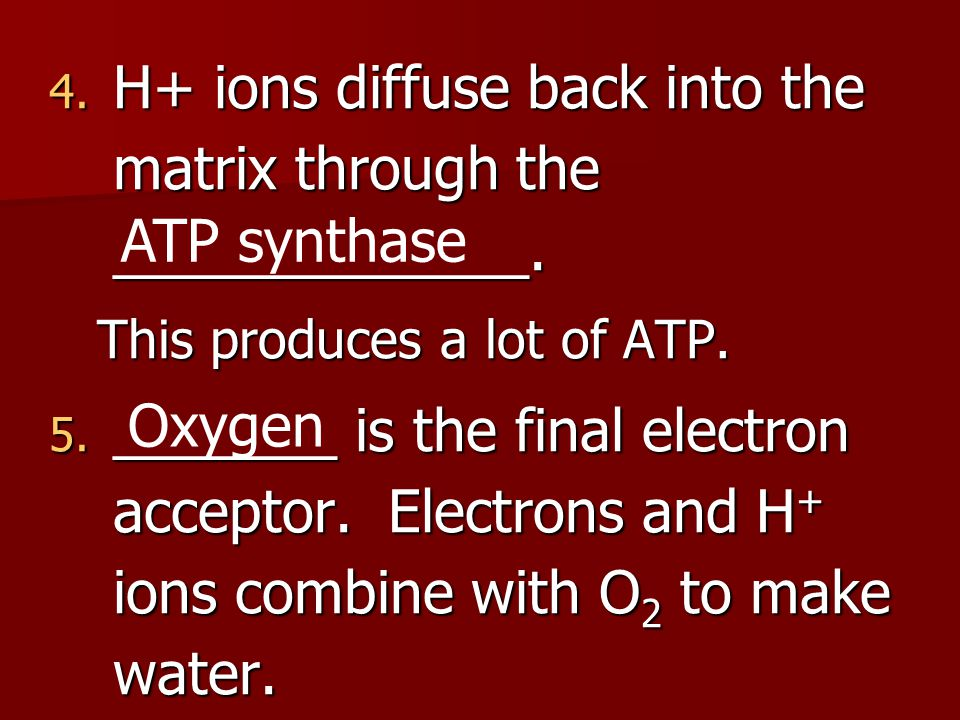 H+ ions diffuse back into the matrix through the _____________.