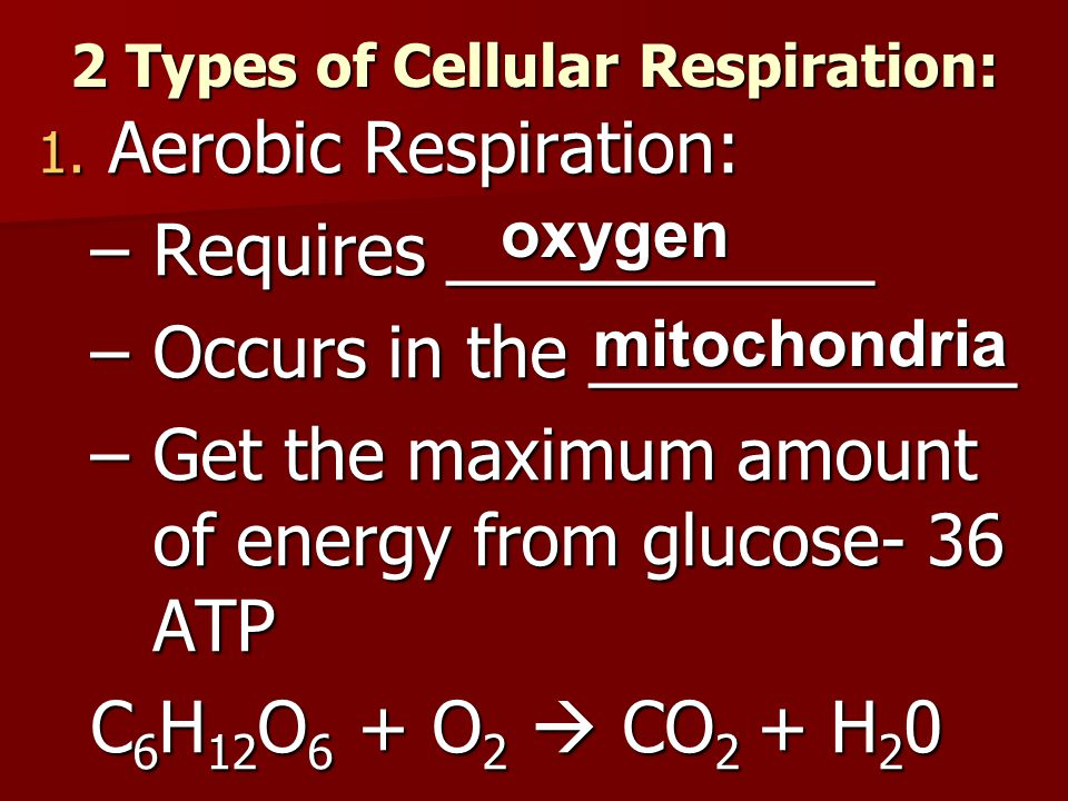 2 Types of Cellular Respiration: