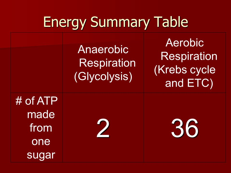 2 36 Energy Summary Table Aerobic Respiration Anaerobic Respiration
