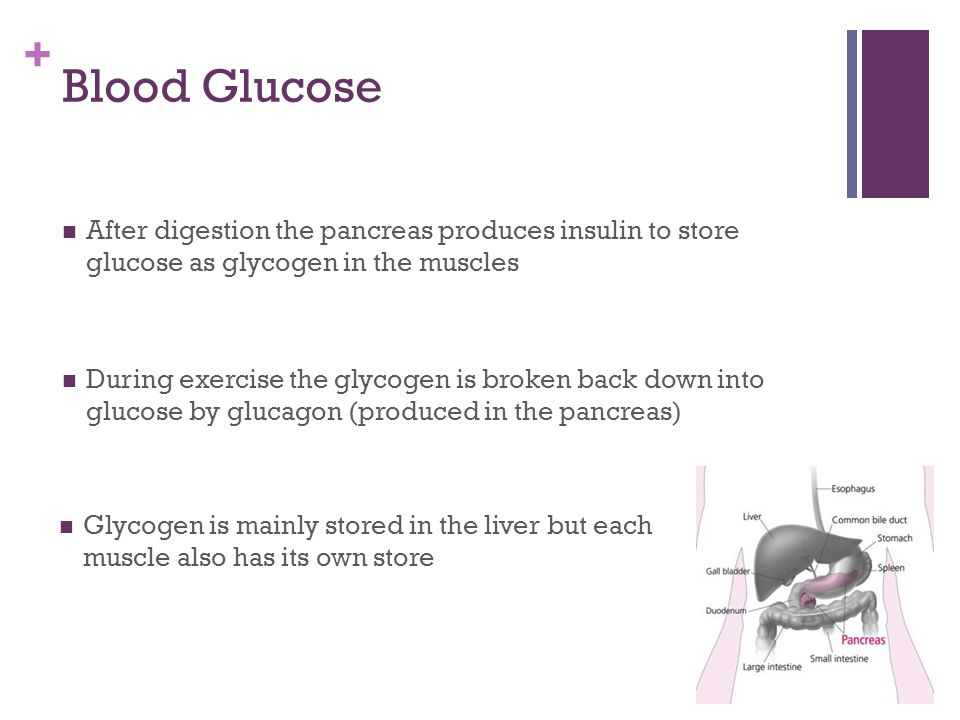 Blood Glucose After digestion the pancreas produces insulin to store glucose as glycogen in the muscles.