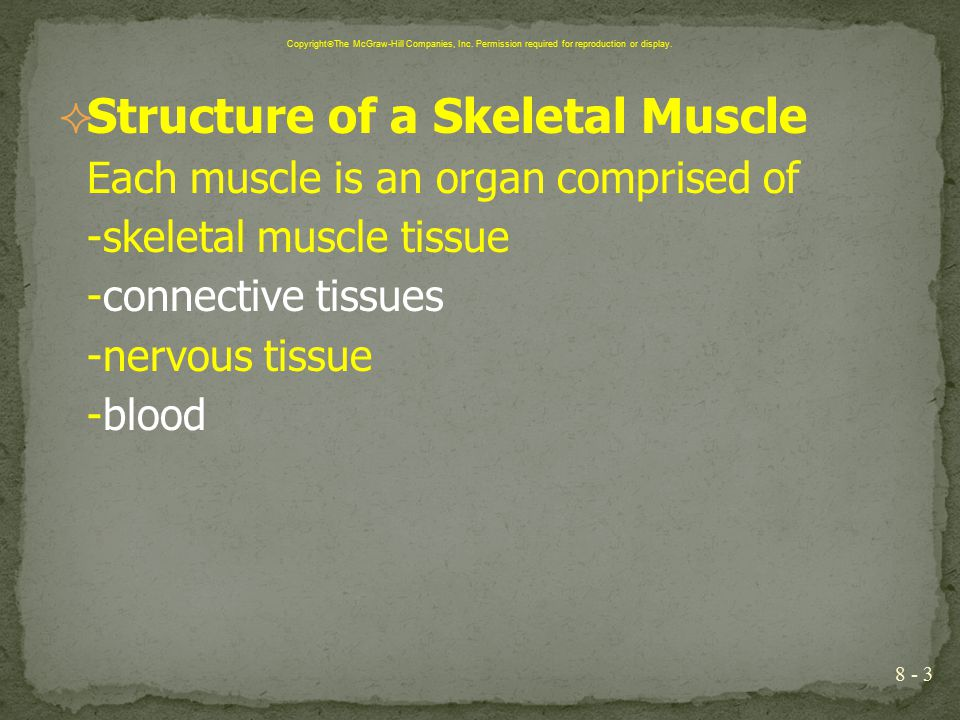 Chapter 8 Muscular System Ppt Download