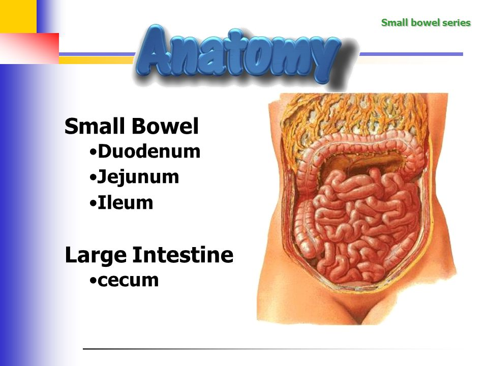 how is the ileum structurally different from the duodenum What effect does cholera enterotoxin have on the cells of the small intestine prolonged opening of chloride channels, allowing uncontrolled secretion of water the presence of what structures distinguishes the duodenum from other parts of the small intestine.