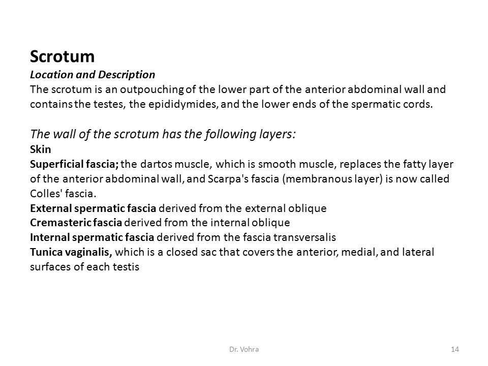 Scrotum The wall of the scrotum has the following layers: