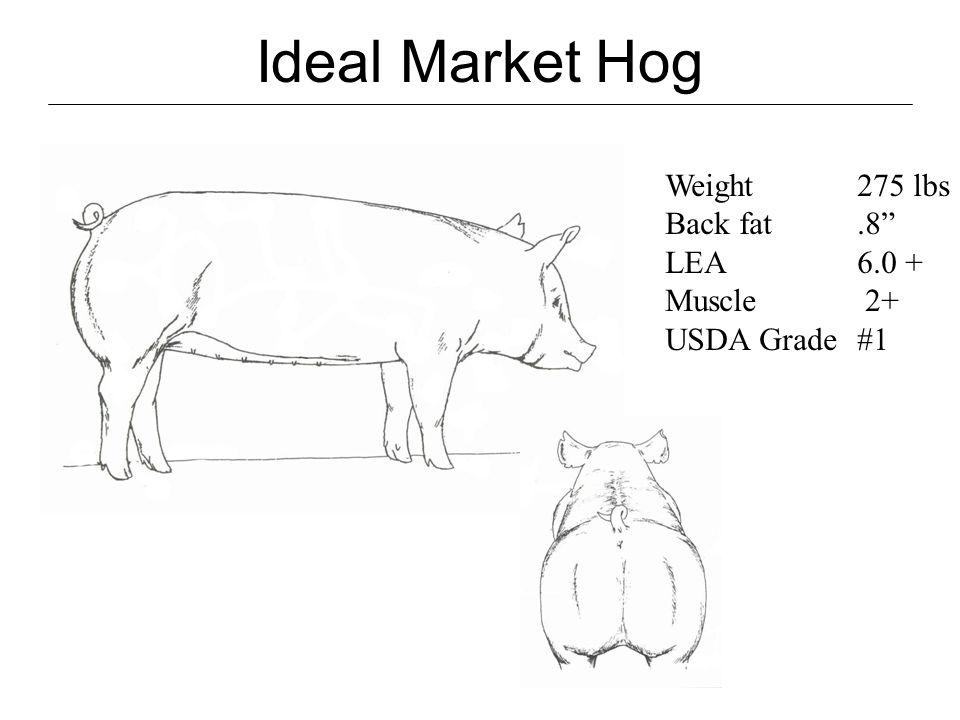 Market Hog Diagram - Electrical Work Wiring Diagram •