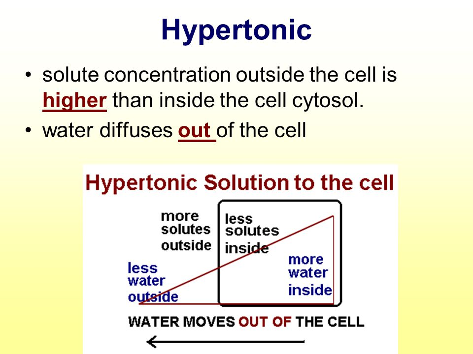 Hypertonic solute concentration outside the cell is higher than inside the cell cytosol.