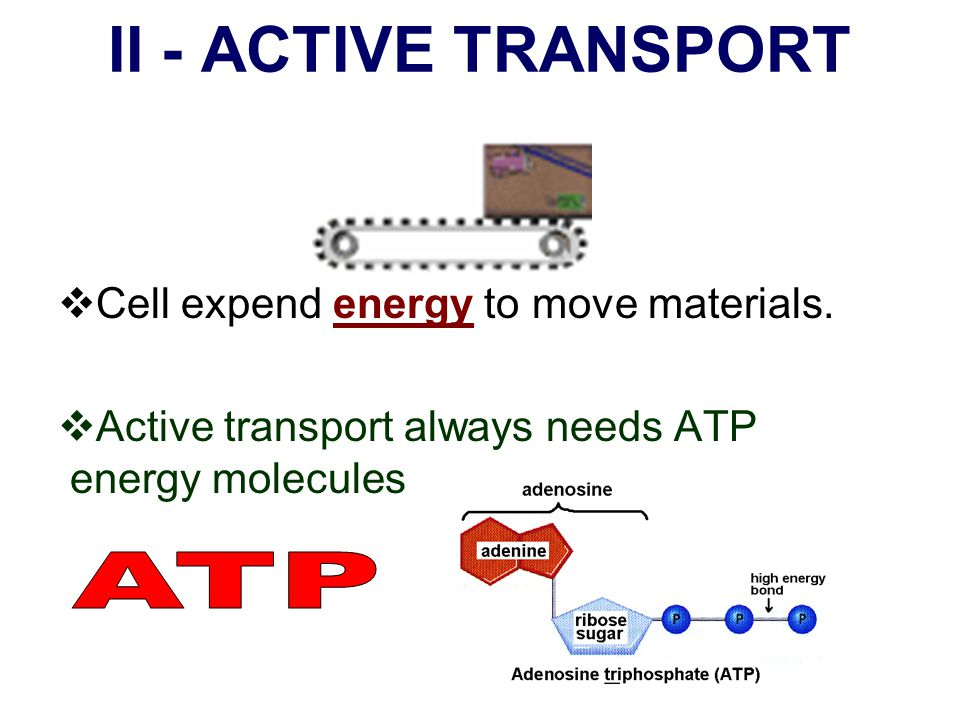 II - ACTIVE TRANSPORT ATP Cell expend energy to move materials.