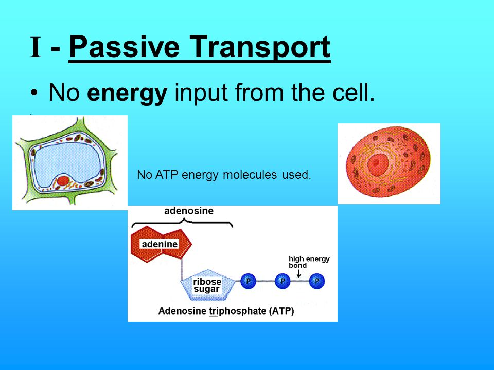 I - Passive Transport No energy input from the cell.