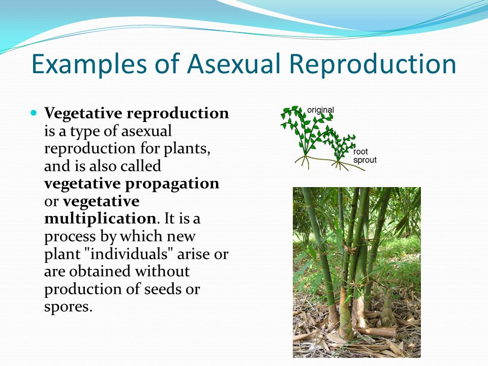 Different modes of asexual reproduction in plants