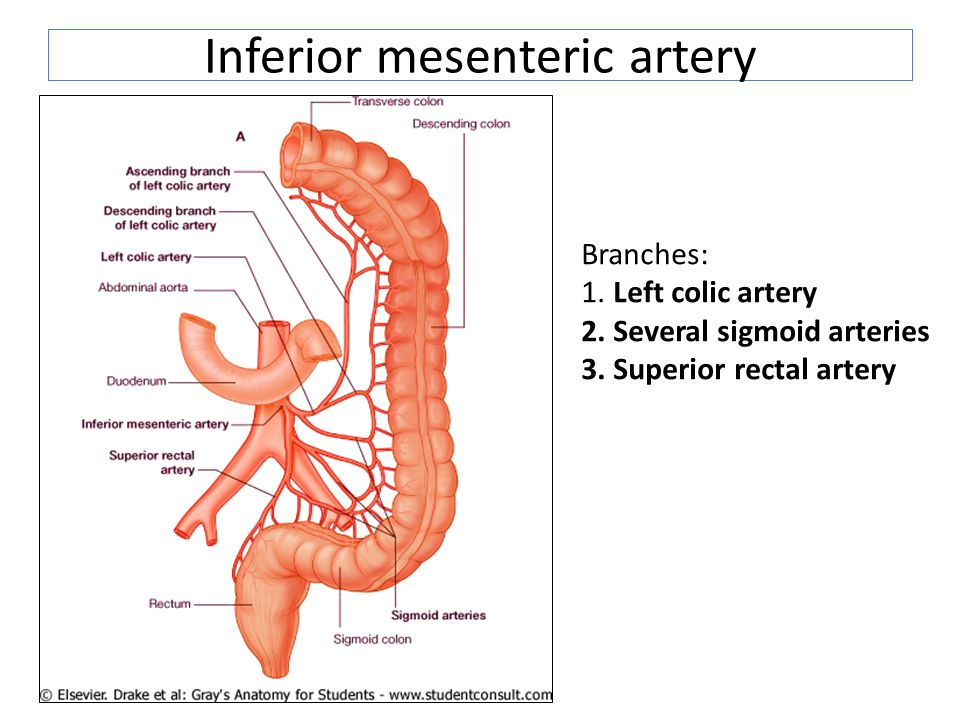 Large Intestine Inferior Mesenteric Artery Ppt Video Online Download