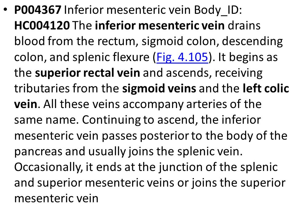 P Inferior mesenteric vein Body_ID: HC The inferior mesenteric vein drains blood from the rectum, sigmoid colon, descending colon, and splenic flexure (Fig.