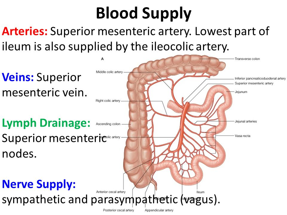 Small Large Intestine Ppt Video Online Download