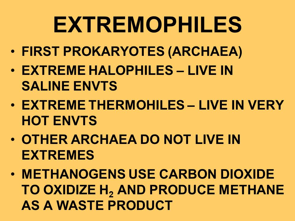 EXTREMOPHILES FIRST PROKARYOTES (ARCHAEA)