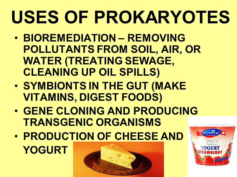 USES OF PROKARYOTES BIOREMEDIATION – REMOVING POLLUTANTS FROM SOIL, AIR, OR WATER (TREATING SEWAGE, CLEANING UP OIL SPILLS)